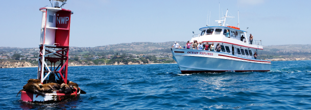 Whale Watching Tour Huntington Beach